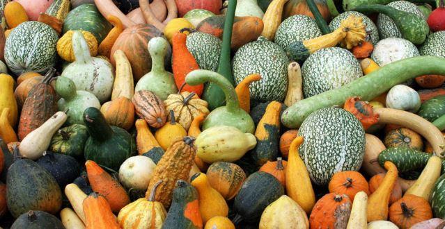 slow food et biodiversité