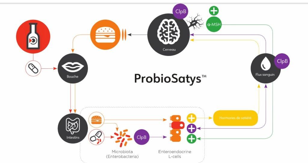 ProbioSatys microbiote