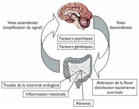 physiopathologie syndrome de l'intestin irritable