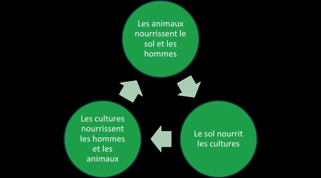 cercle vertueux protéines végétales et animales